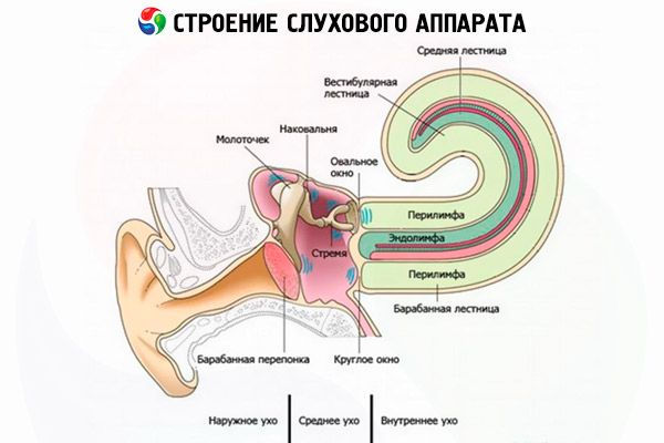 inflammation i innerörat